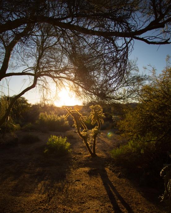 Arizona Trip 030217 027-3