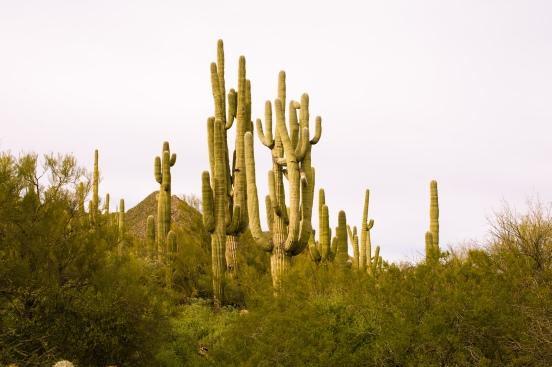 Arizona Trip 030217 1366-46.jpg